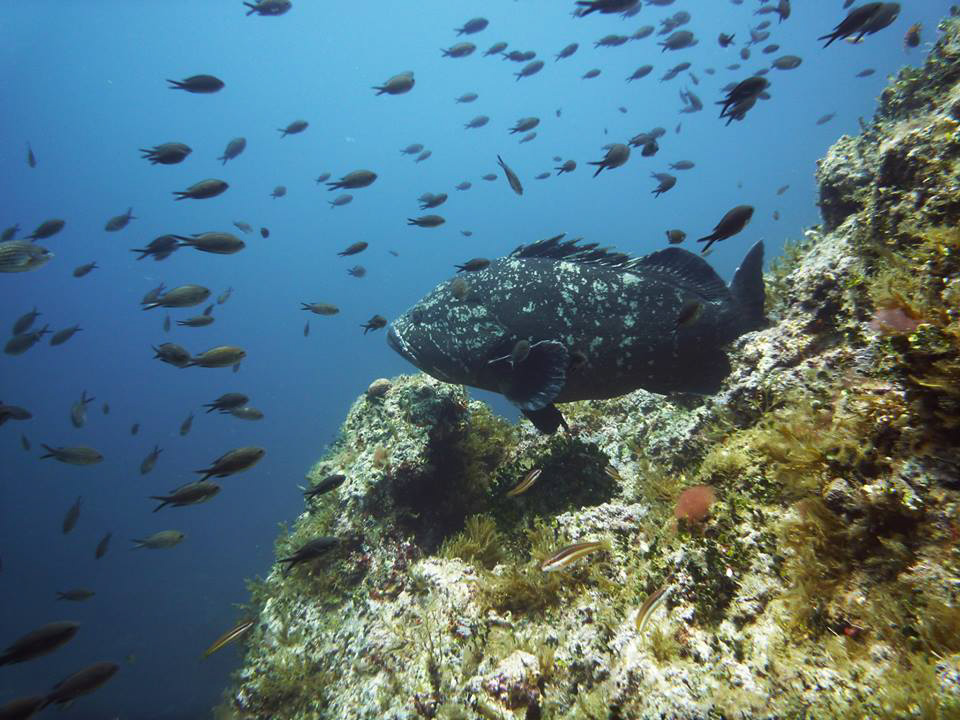 Buceo en Islas Columbretes